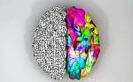 你的左右脑分别有几岁?