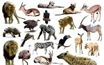 你是哪种动物的化身?